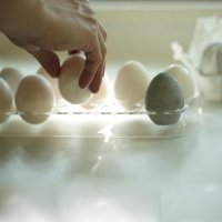 drying-egg.2