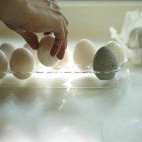 drying-egg.2