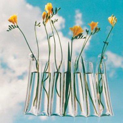 window-vase.4